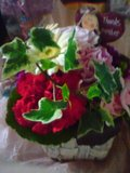 20090508花.jpg